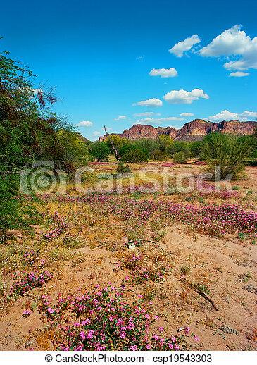 Spring In The Desert - csp19543303