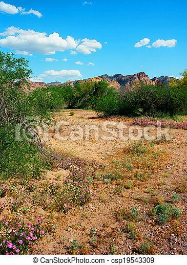 Spring In The Desert - csp19543309
