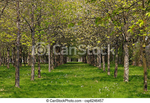 Spring in the forest - csp6246457