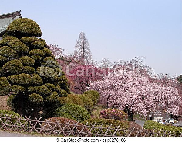 Spring Japanese garden - csp0278186