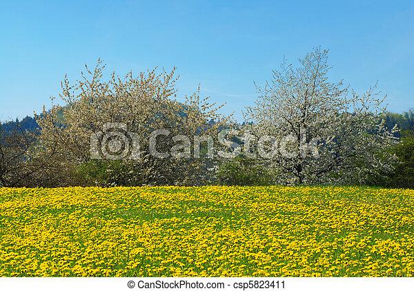 Spring landscape - csp5823411