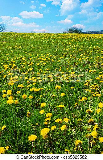 Spring landscape - csp5823582