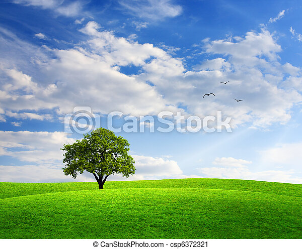 Spring landscape with oak tree and blue sky - csp6372321