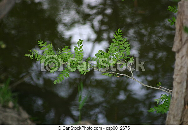 Spring Leaves - csp0012675