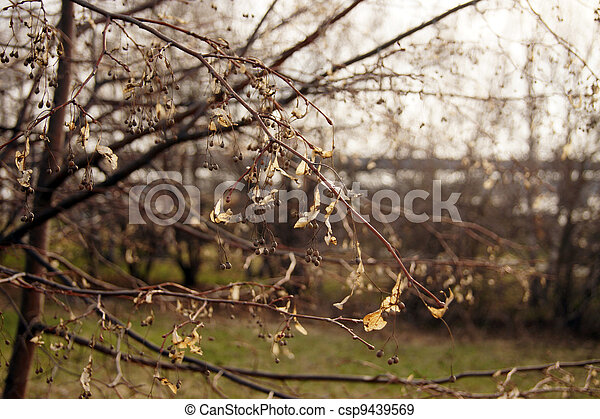 Spring lightness                - csp9439569