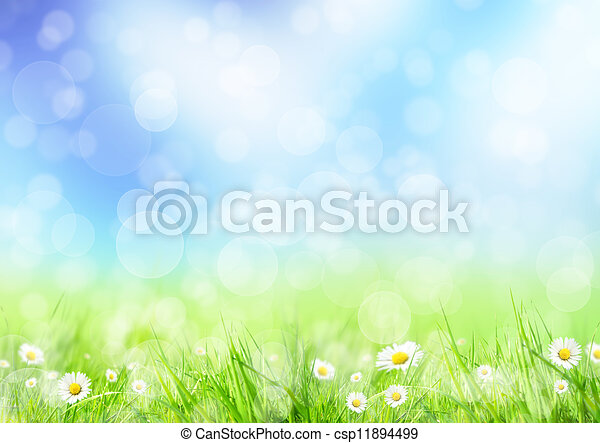 Spring meadow - csp11894499