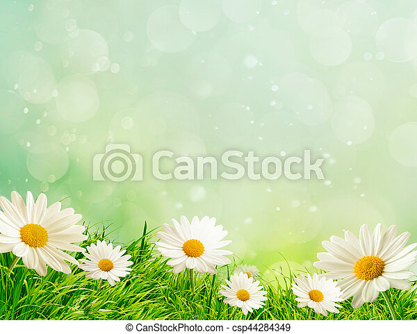 Spring meadow with daisies - csp44284349