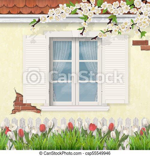 spring old facade wooden window branch tulips - csp55549946