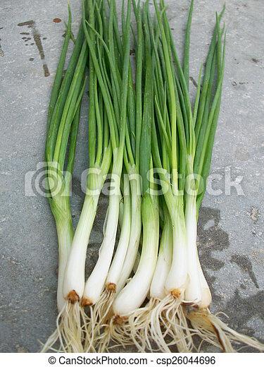 Spring onions - csp26044696
