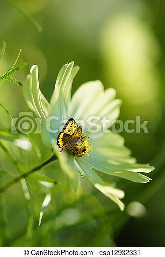 Spring or summer abstract nature background  - csp12932331
