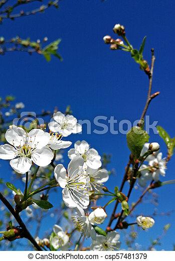 spring - csp57481379