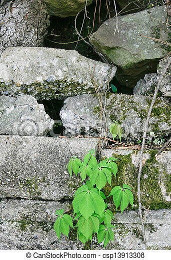 Spring Plant & Weathered Block Wall #2 - csp13913308