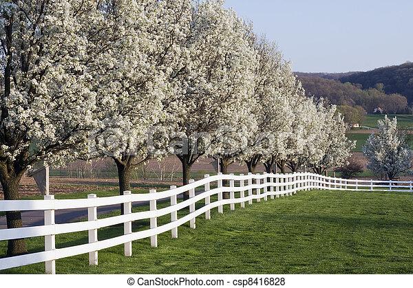 Spring Season Bloom - csp8416828