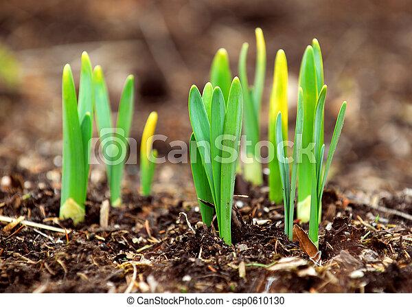 Spring shoots - csp0610130