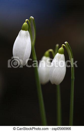 spring - csp0566966