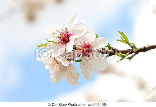 spring - csp2414964