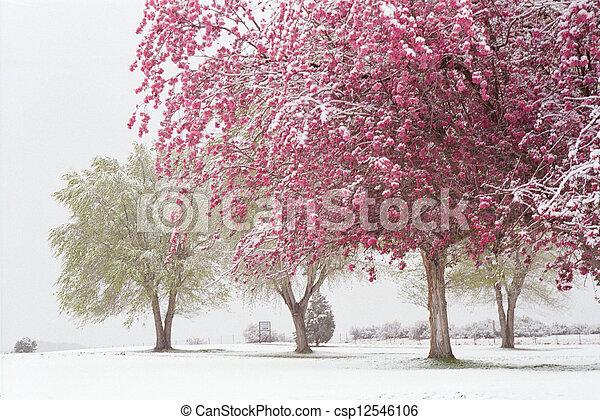 Spring - csp12546106