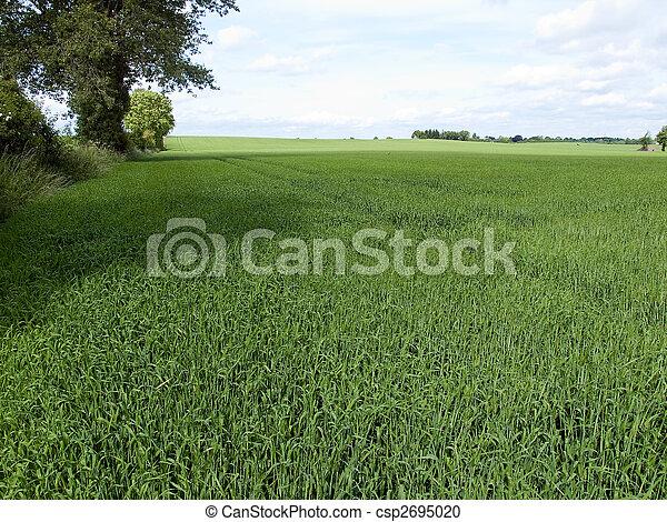 Spring summer green field background - csp2695020