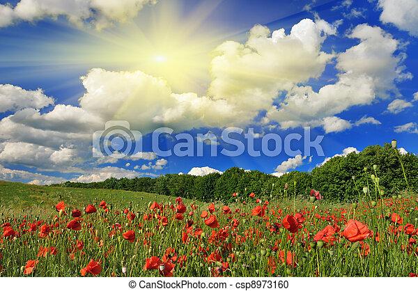 Spring sunny day on a poppy field. - csp8973160