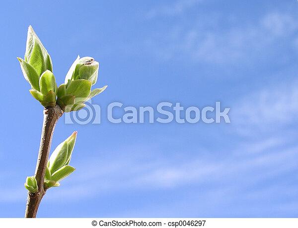 spring time - csp0046297