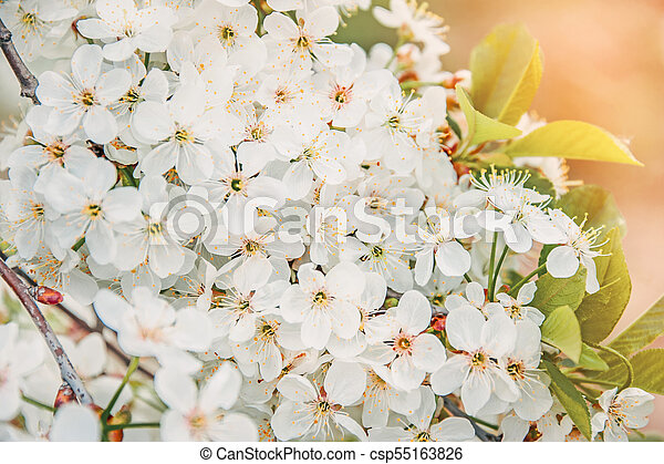 Spring Tree Branch With Small White Flowers Background Copy Space