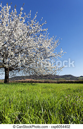 spring tree - csp6054402