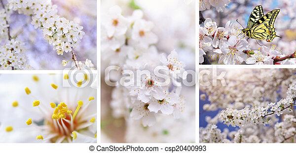 Spring tree - csp20400993