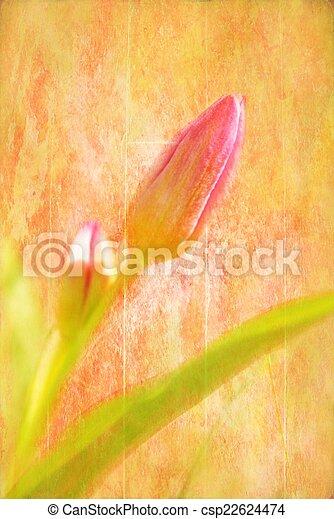 Spring Tulip - csp22624474