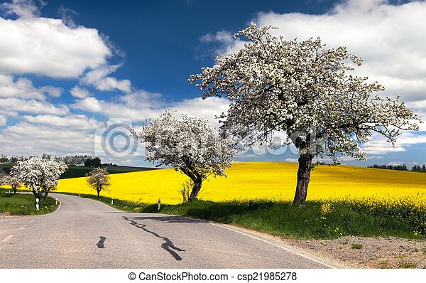spring view of road with alley - csp21985278