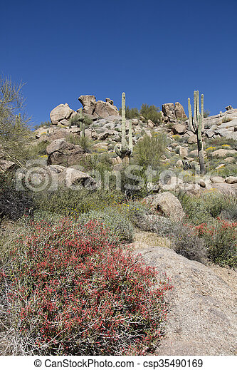 Spring Wildflowers of the desert - csp35490169