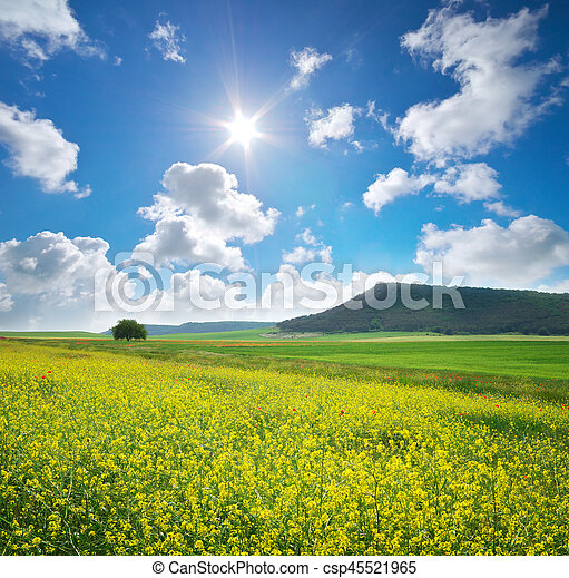 Spring yellow flowers in meadow - csp45521965