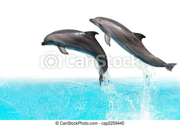 Springende Delfine - csp2259445