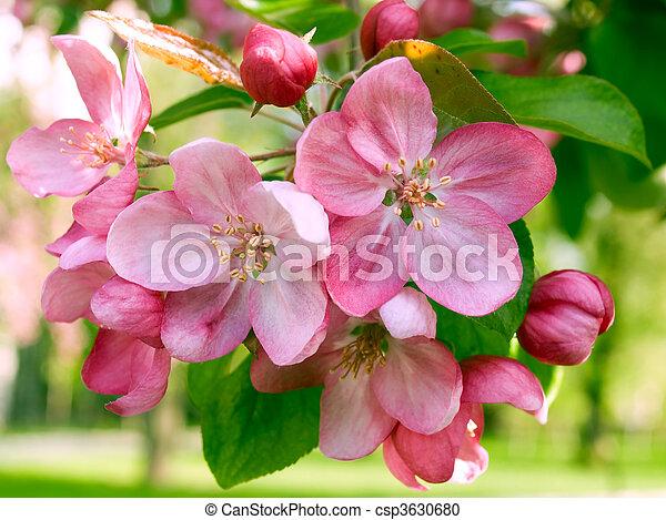 springtime. - csp3630680