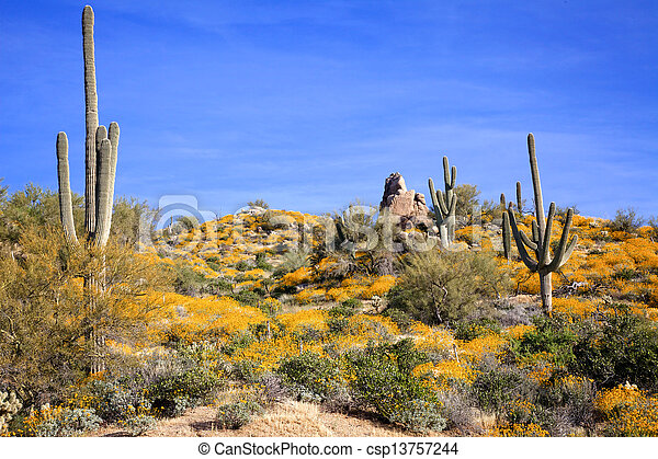 Springtime in the Arizona Desert - csp13757244