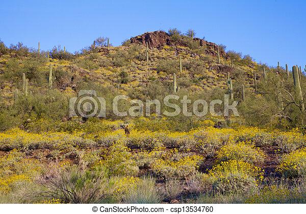Springtime in the Desert - csp13534760