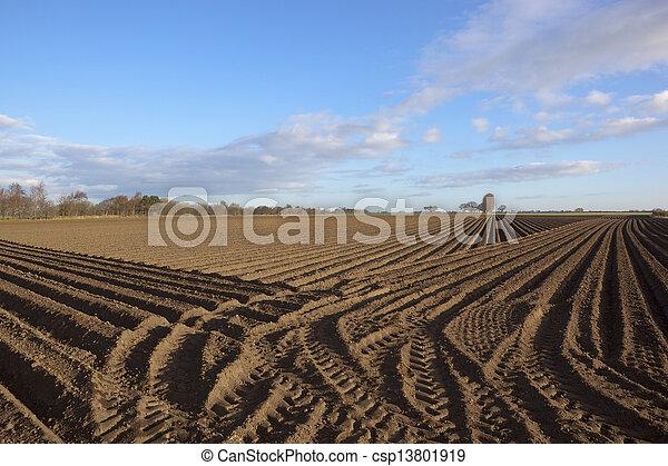 springtime potato rows - csp13801919