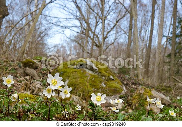Springtime - csp9319240