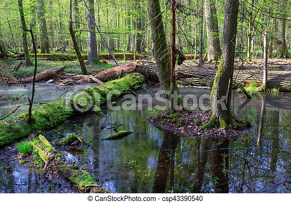 Springtime wet mixed forest with standing water - csp43390540