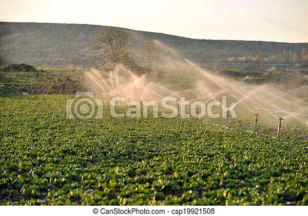 Sprinkler watering crops in field - csp19921508