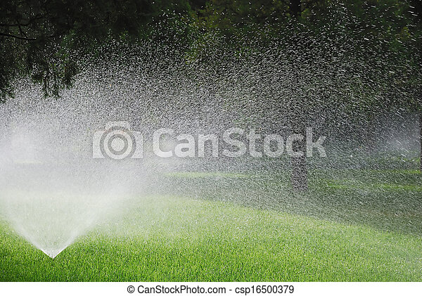 Sprinkling plants - csp16500379