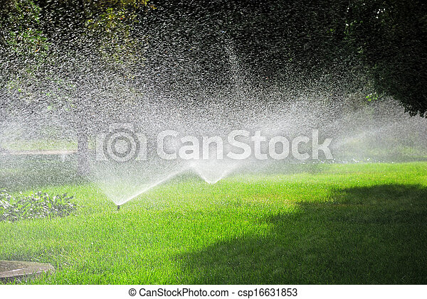 Sprinkling plants - csp16631853