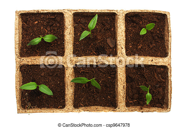 Sprouts of pepper - csp9647978