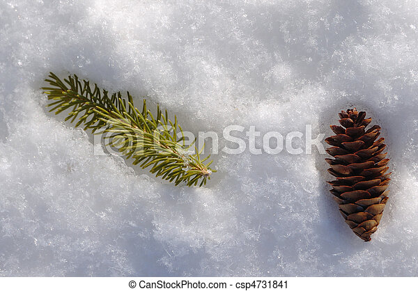 Spruce Branch and Pine Cone - csp4731841