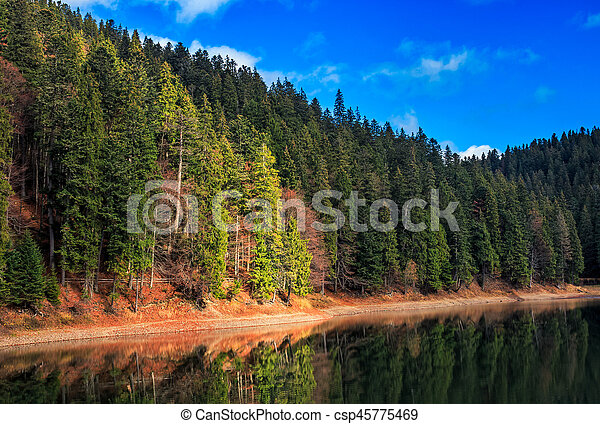 spruce forest on the lake in mountains - csp45775469