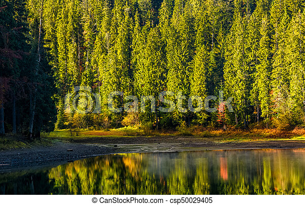 spruce forest with lake at sunrise - csp50029405