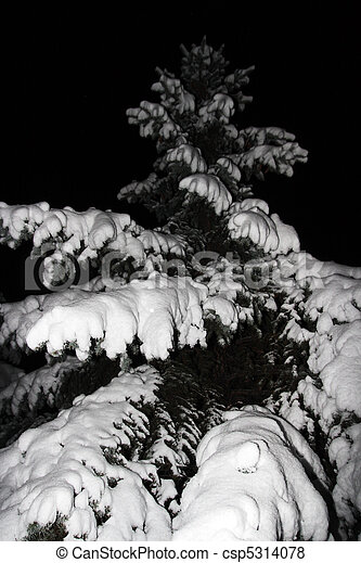 spruce in the snow, night - csp5314078
