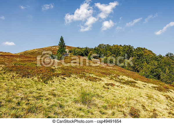 spruce tree on a grassy meadow of the hill - csp49491654