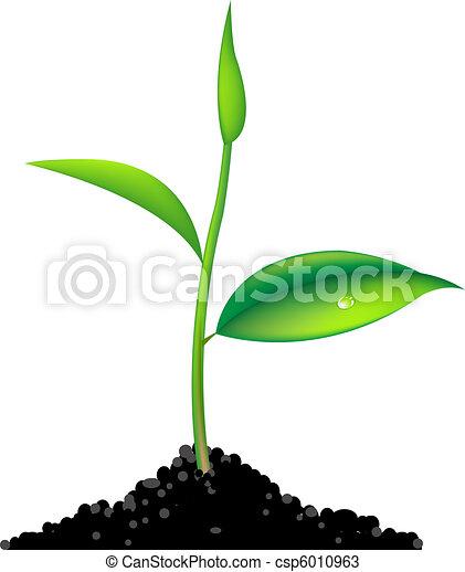 spruit, groene - csp6010963