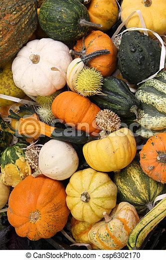 Squash varieties - csp6302170