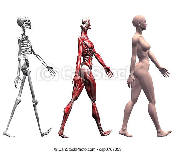 Illustrations et Cliparts de Les bras muscles. 1 566 dessins et  illustrations vecteurs EPS de Les bras muscles disponibles pour la recherche  parmi des ... c3283c307ca